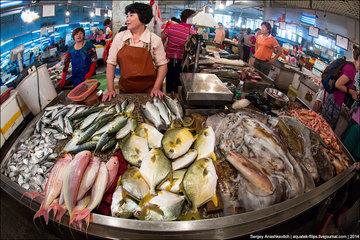 Топ-список самой дорогой рыбы в мире