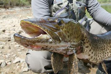 В Хабаровском крае могут запретить лов рыбы лососевых пород