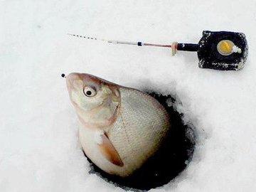 Снасть для засады на рыбу