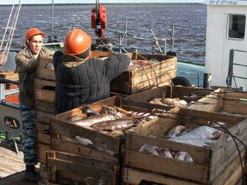 Коренным народам Ямала увеличили квоты на традиционное рыболовство