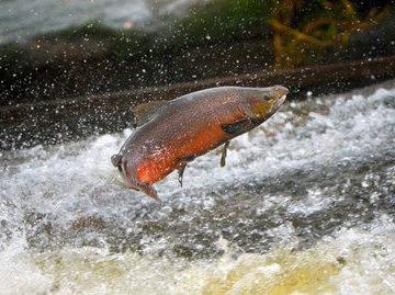 В Карелии оштрафовали двух браконьеров за незаконную ловлю рыбы