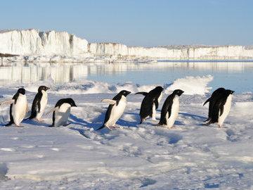 Популяция пингвинов в Антарктике сократилась в два раза