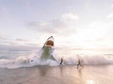 Акулы-людоеды обосновались в районе пляжей двух американских штатов