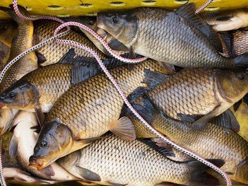 «Карпfishing» по российски