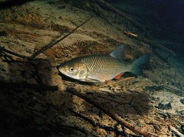 Самая красивая рыба