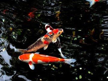 В Австралии прошел рыбный дождь