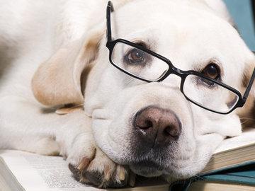 Собаки не умнее других животных