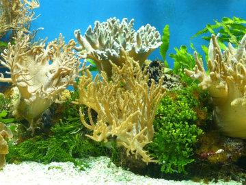 Биологи обнаружили в Индийском океане новых для науки существ