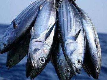 Поймайте свою «большую рыбу»
