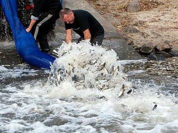В Ставропольском крае проходит кампания по зарыблению водоемов