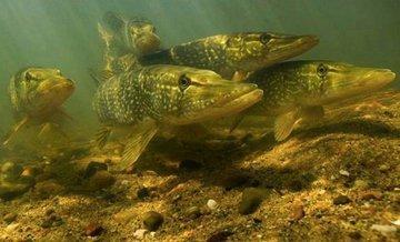 Какую рыбу и как ловить в апреле
