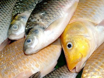 В Тольятти на предприятии обнаружили почти полторы тонны опасной рыбы