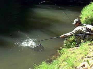 Водоемы Ленобласти вошли в ТОП-6 лучших регионов для рыбалки