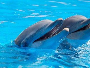 В акватории Черного моря продолжают гибнуть дельфины