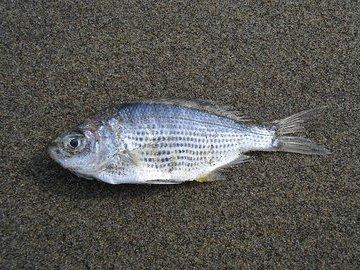 В трех реках Орловской области из-за сброса сточных вод погибла рыба