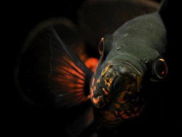"""Океанологи обнаружили """"невидимых"""" глубоководных рыб"""