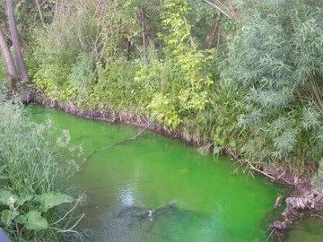 В Минэкологии Башкирии объяснили появление зелёной воды в Каме