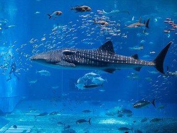 Тёплые воды заставляют морских обитателей мигрировать, чтобы спастись от жары