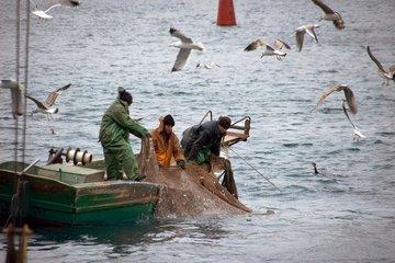 Виды разрушительной, законной и незаконной рыбалки