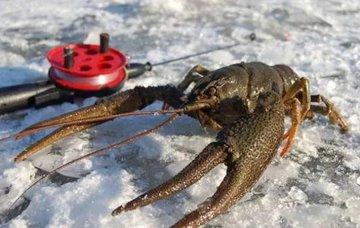 Как ловить раков зимой
