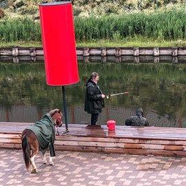 В Туле «рыбачил» конь в пальто