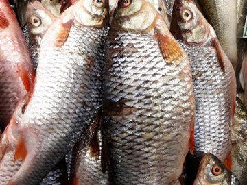Промышленный вылов рыбы в Украине сократился на 25%