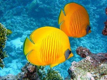 В глубинной морской зоне обнаружили огромное скопление рыб