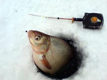 Зимняя рыбалка на необычную приманку