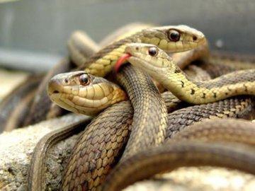 Ростовчанин развел дома змеюшник