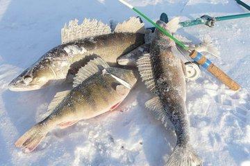 Маленькие хитрости при ловле трофейной рыбы