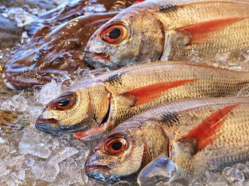 За незаконный вылов рыбы двум жителям Ростовской области грозит до двух лет тюрьмы