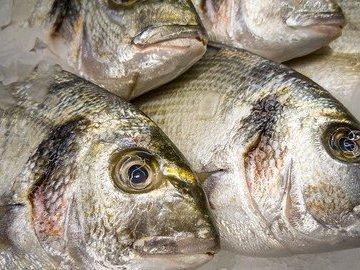 В Калининградском заливе задержали браконьеров с уловом более 400 кг рыбы