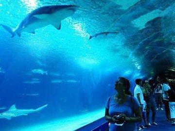 Китаянка упала в аквариум к акулам