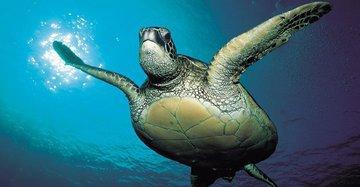 Рыбацкие лодки убивают миллионы, а не тысячи морских черепах