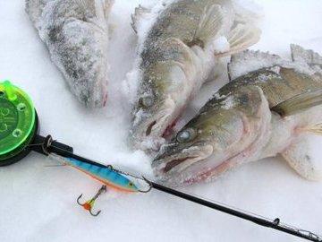 Что предложить рыбе вместо живца?