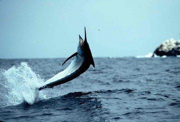 Самые экзотические места для рыбалки