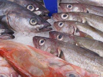 Рыбакам разрешат обрабатывать рыбу в море