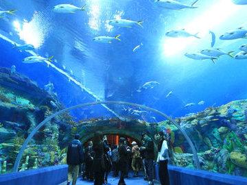В Китае открылся первый в мире аквариум в горах