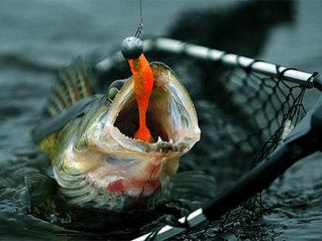 Полезные совету рыбаку