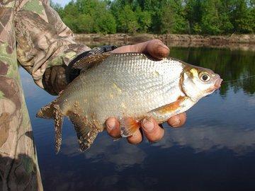 Рыбалка на густера