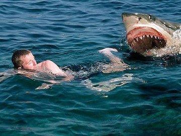Рыбаки отбили мальчика у акулы