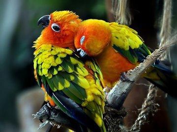 «Птица года» любит приложиться к спиртному