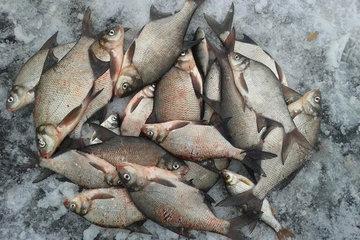 Шевелись, плотва - ищем рыбку зимой