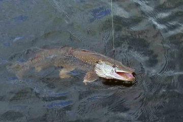 Ловим рыбу в мутной воде