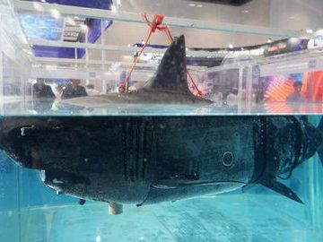 В Китае разработали разведывательный дрон в виде акулы