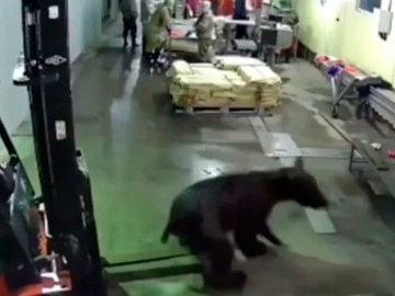 В Охе на рыбзавод ворвался медведь