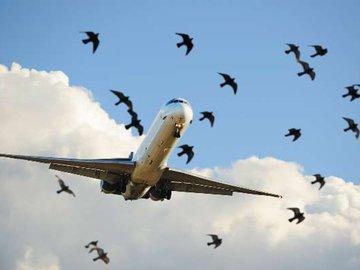 Куропатки не дали взлететь самолету в омском аэропорту