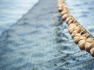 Рыболовные сети найдут и под землей