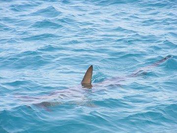 В Австралии рыбак отбился от акулы удочкой
