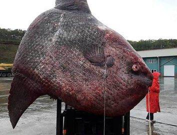 Самые невероятные рыбацкие трофеи